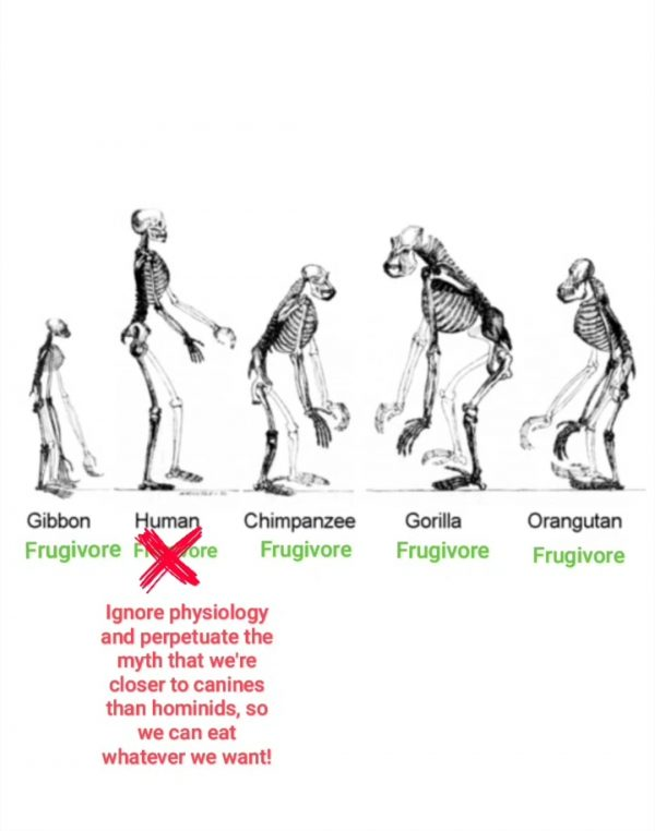 Humans Are Frugivores